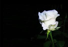 rose-deuil